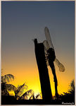 Title: Sunset Dragonfly