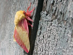 Title: Colorful moth