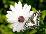 Title: Butterfly and a Flower