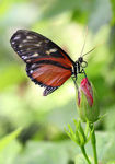 Title: Butterfly Resting