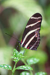 Title: Butterfly Resting 2