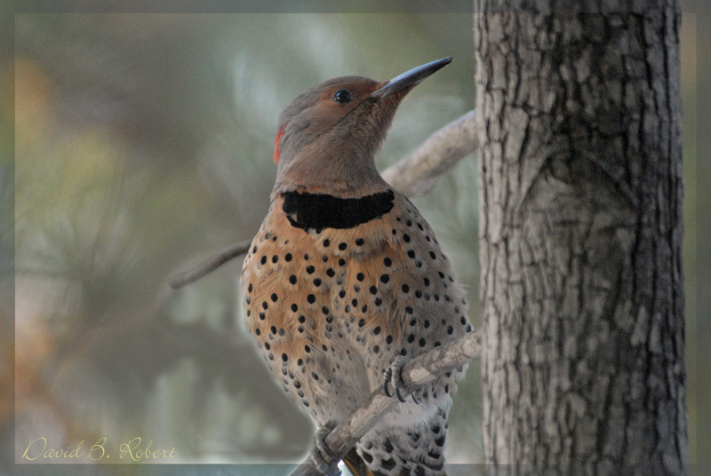 Flicker in the Morning
