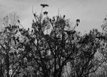 Title: Buzzards Roost