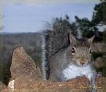 Title: A Thieving Squirrel