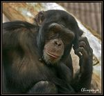 "Title: ""The Thinker"" Camera: Canon EOS 300 D"