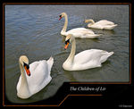 Title: The Children of Lir