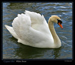 Title: White Swan