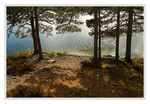 Title: Pines And Lake