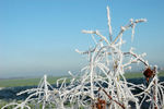 Title: Frost !