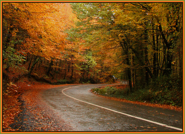 Autumn and colors - 2
