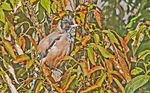 Title: Bird and leaves