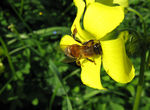 Title: bee at work