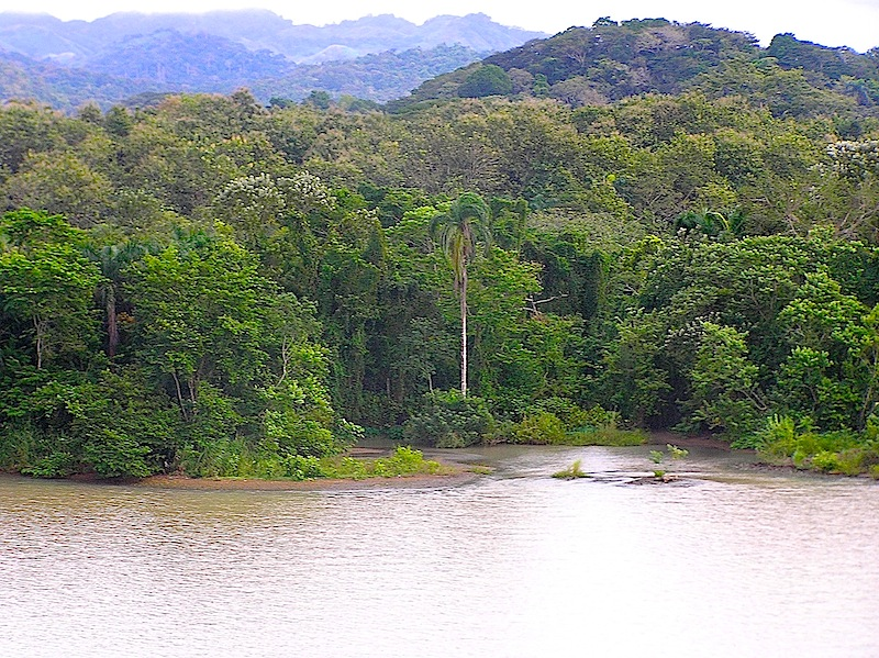 The canal and the jungle