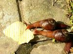 Title: snails eating chips