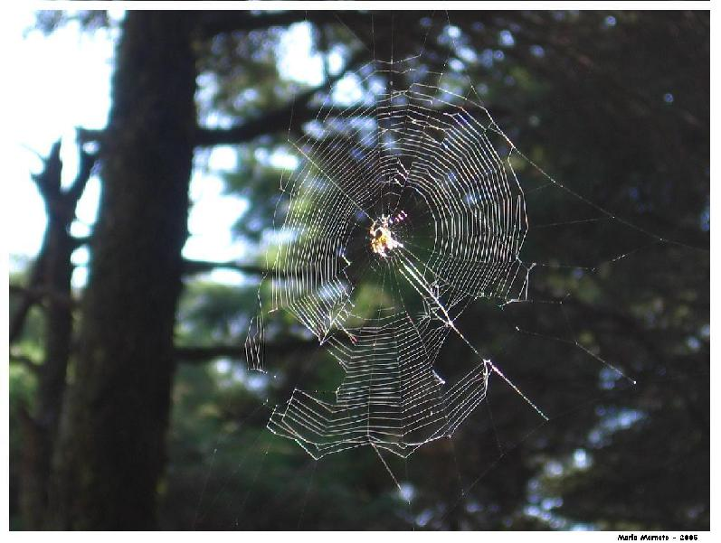 Little Spider on is web...