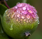 Title: Raindrops on an apple