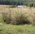 Title: Why is the water so far away?