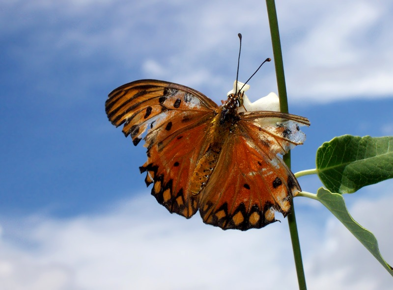 Wounded butterfly