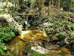 Title: Ulu Paip Forest Reserve