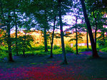 Title: Ven Forest Sunset