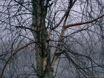 Title: Abstract of Tree in fog