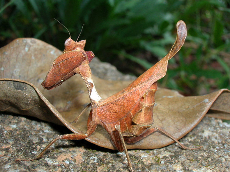 an analysis of the topic of the nature an the preying mantis Life is beautiful from atoms to cells, from genes to proteins, from populations to ecosystems, biology is the study of the fascinating and intricate systems that make life.