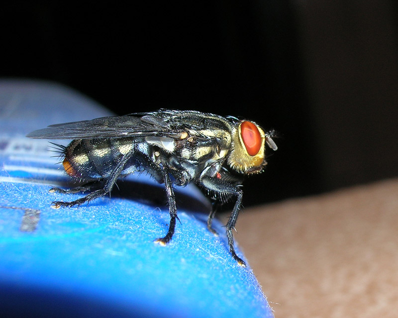 Poses of the Fly l