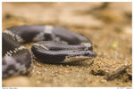 Title: Young & Deadly Maybe not so deadly
