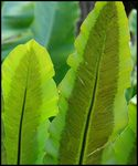 Title: Green Leaves