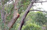 Title: Gum Tree Home