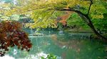 Title: Autumn in Japan
