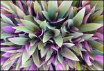 Title: Moses Plant