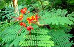 Title: Flower & Fronds