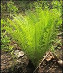 Title: Bush regrowthCanon EOS 50 D