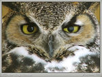 Title: Great Horned Owl II