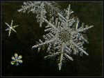 Title: * Snowflake III * Camera: Canon PowerShot S2 IS