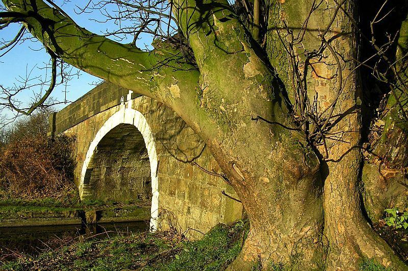 canalside tree