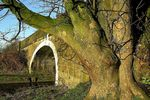 Title: canalside tree