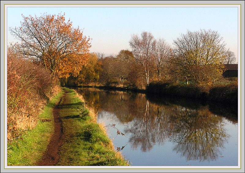 canalside trees