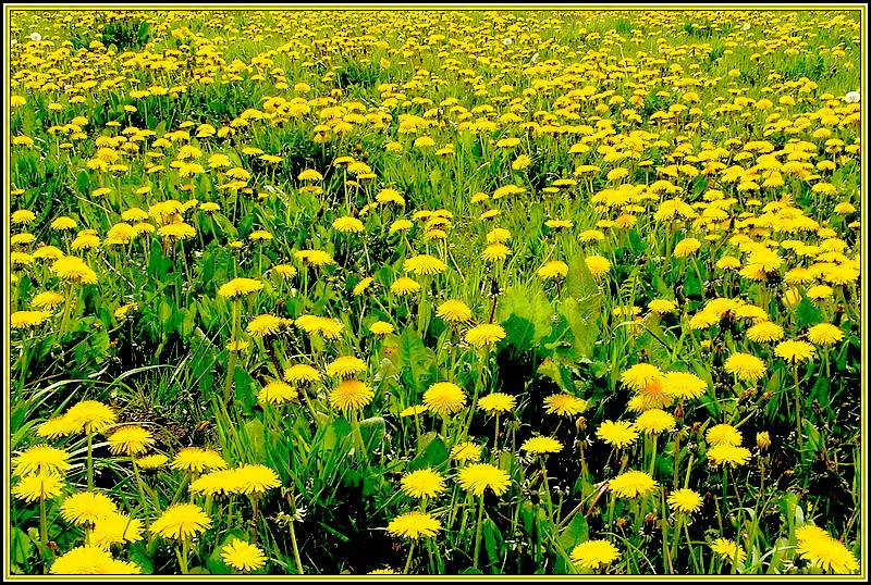 a field of weed