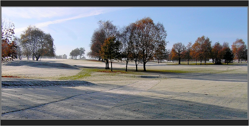 trees and frost