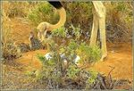 Title: male ostrich and family