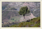 Title: tree and mountain