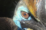 Title: Bird�s eye