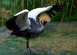 Title: Crown crane in action