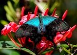 Title: Papilio drying himself