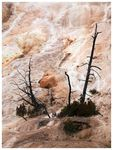 Title: Mammoth Hot Springs #3