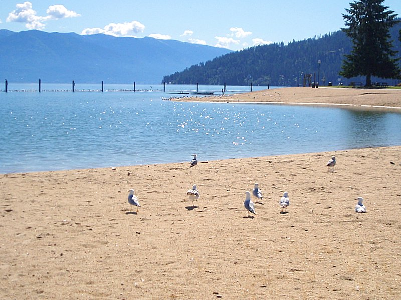 Lake Pend Oreille and seagulls