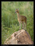 Title: Back from KrugerSony Alfa dSLR A100