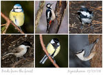 Title: Birds from the forestSony  Alfa  dSLR A700